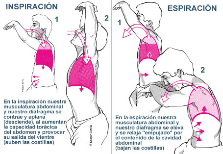 Beneficios de los ejercicios respiratorios para las for Importancia de oficina wikipedia