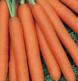 zanahoria-hidroponica