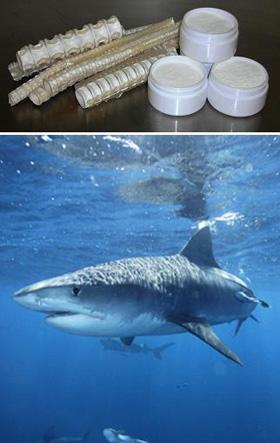 SharkSCP